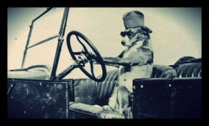 dog_driving_car