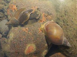 599_snails1